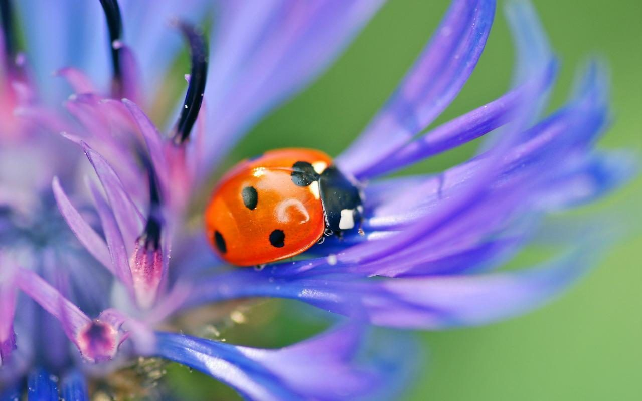 lady bugs bees flowers - photo #13
